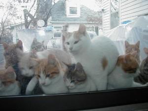 faire chier son voisin avec des chats
