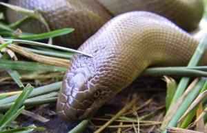 Guerre de voisins, un serpent mort devant sa porte.