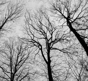 Hauteur des arbres du voisin.