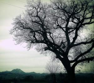 Loi arbre du voisin.
